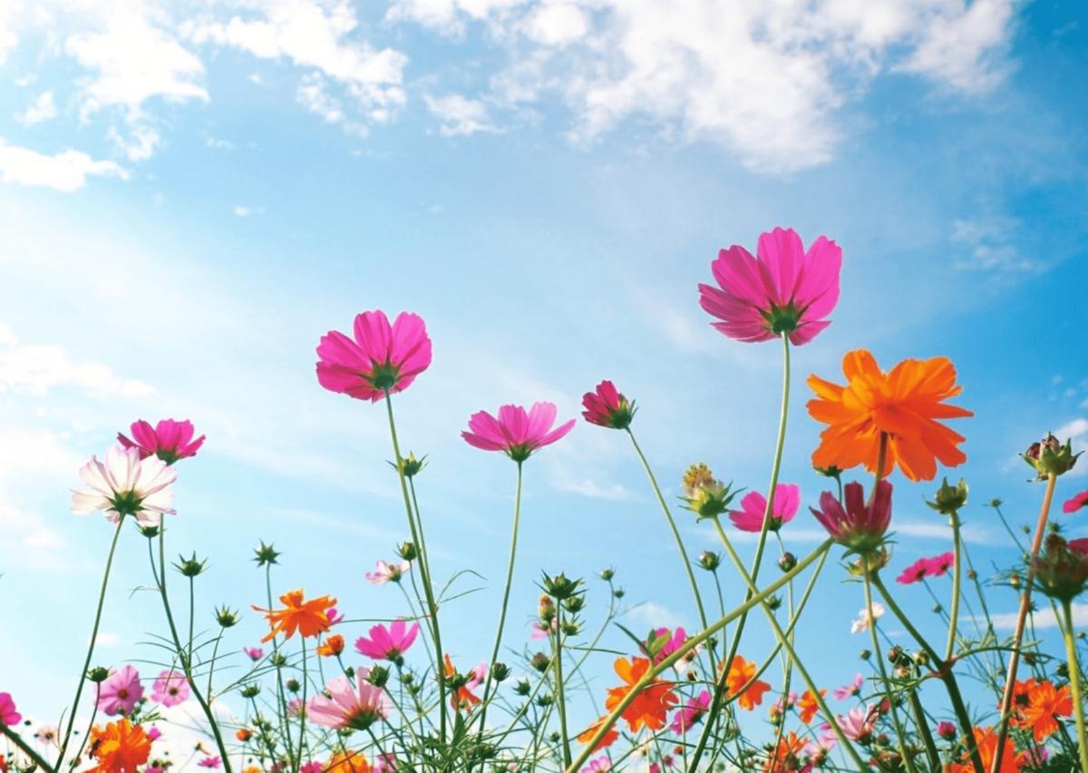 見開きでお花の美しさを全面に