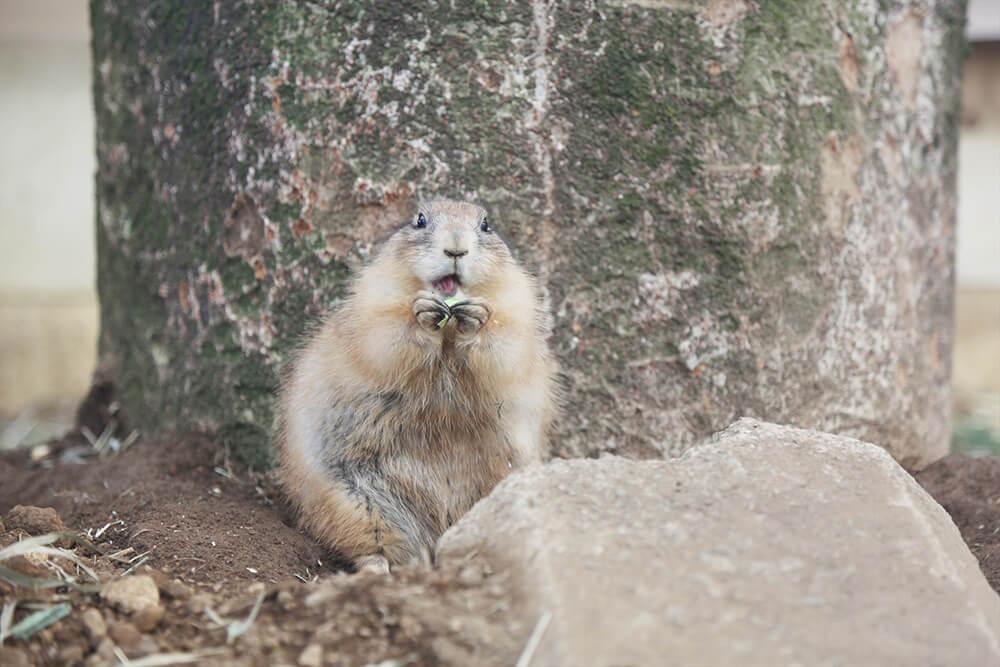 もっと可愛く!もっと素敵に!動物園での写真の撮り方