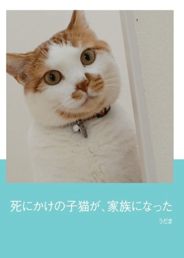 フォトブック_「死にかけの子猫が、家族になった」 うだまさん