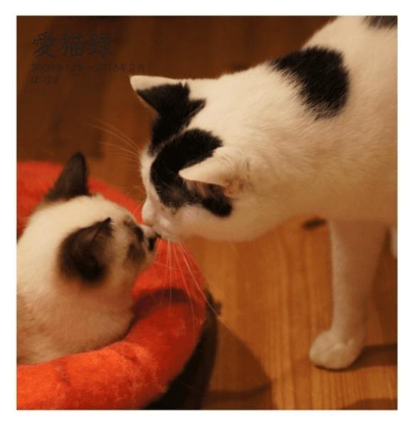 フォトブック_「愛猫録」