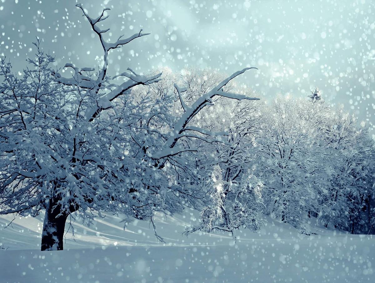 降り注ぐ雪はフラッシュで幻想的にとらえて