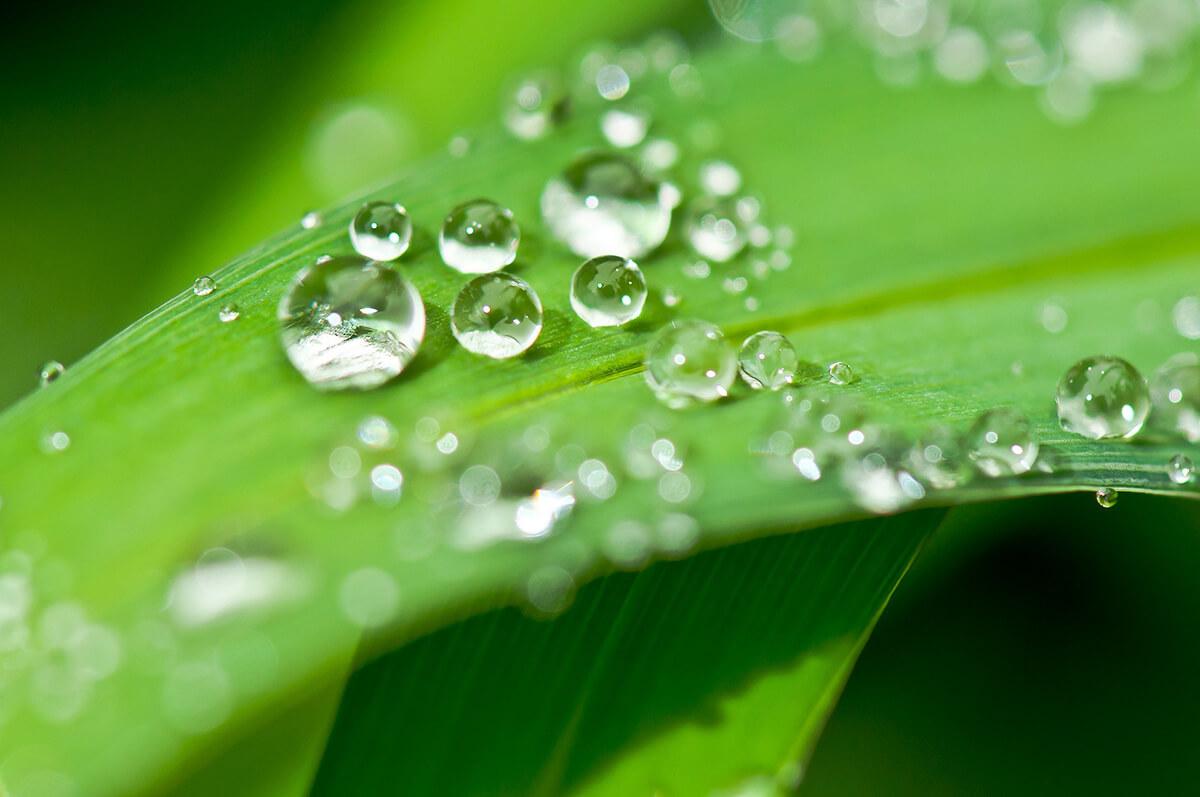 雨の日の花や葉っぱのしずくを撮る