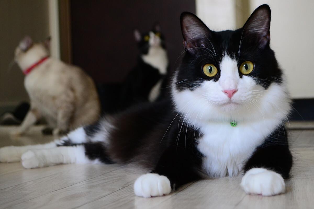 スマホを使った愛猫の写真の撮り方【テクニック編】