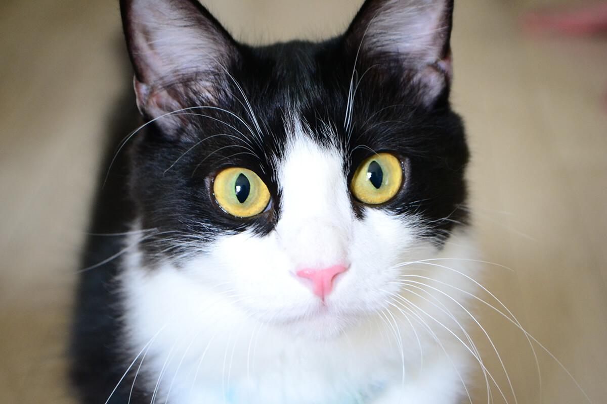 スマホを使った愛猫の写真の撮り方【シチュエーション編】