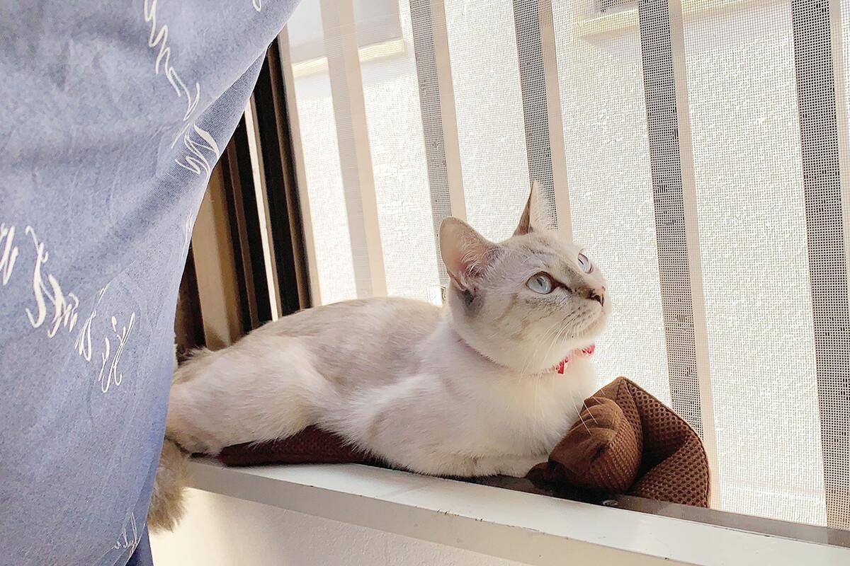 スマホを使った愛猫の写真の撮り方【構図編】
